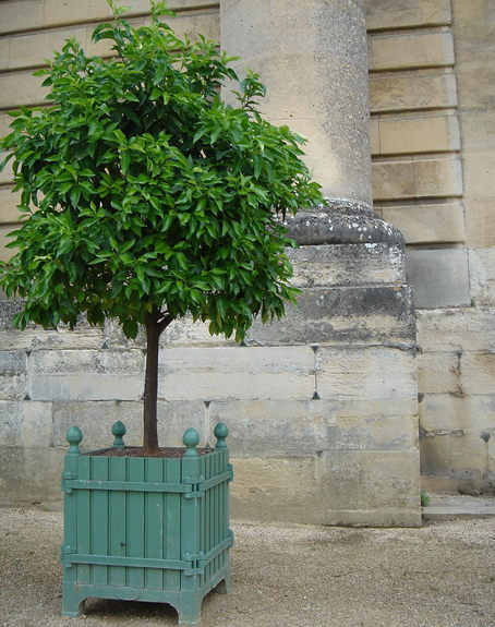 Of The Garden Bo Created In 1670 By André Le Nôtre For Growing Orange Trees At Château De Versailles Under Reign Louis Xiv
